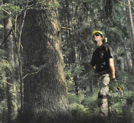 Как заготавливали лес в старину